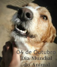 Dia do Animal