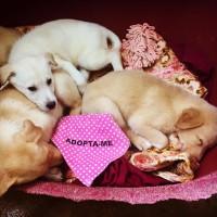 4 lindos cachorros
