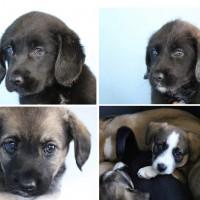 4 cachorras
