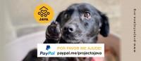 Ajude nos temos PayPal !