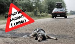 Criminalização Do Abandono e Maus-Tratos A Animais